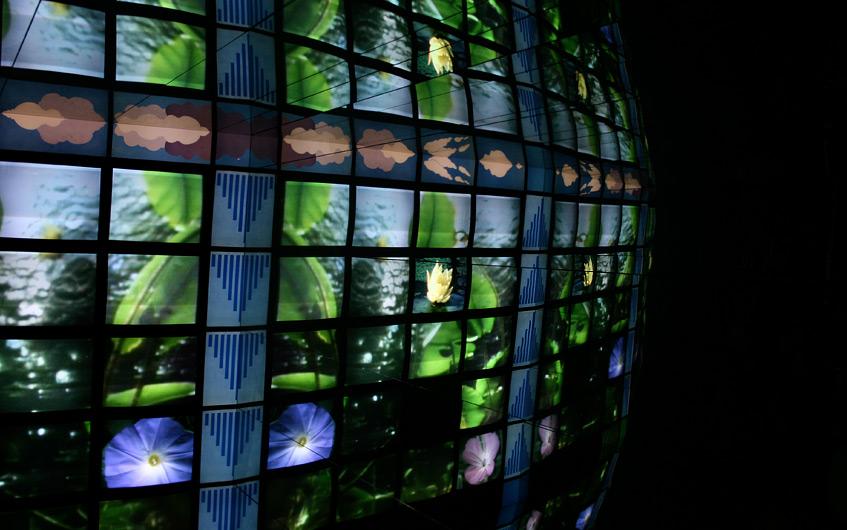 Was könnte lehrreicher zum Thema Natur sein, als eine Videoinstallation?