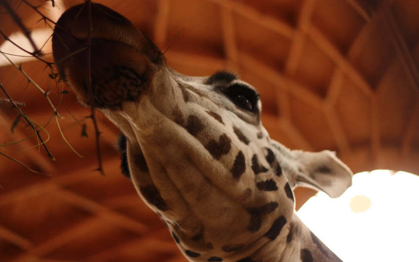 Wirklich schön: Der Budapester Zoo.