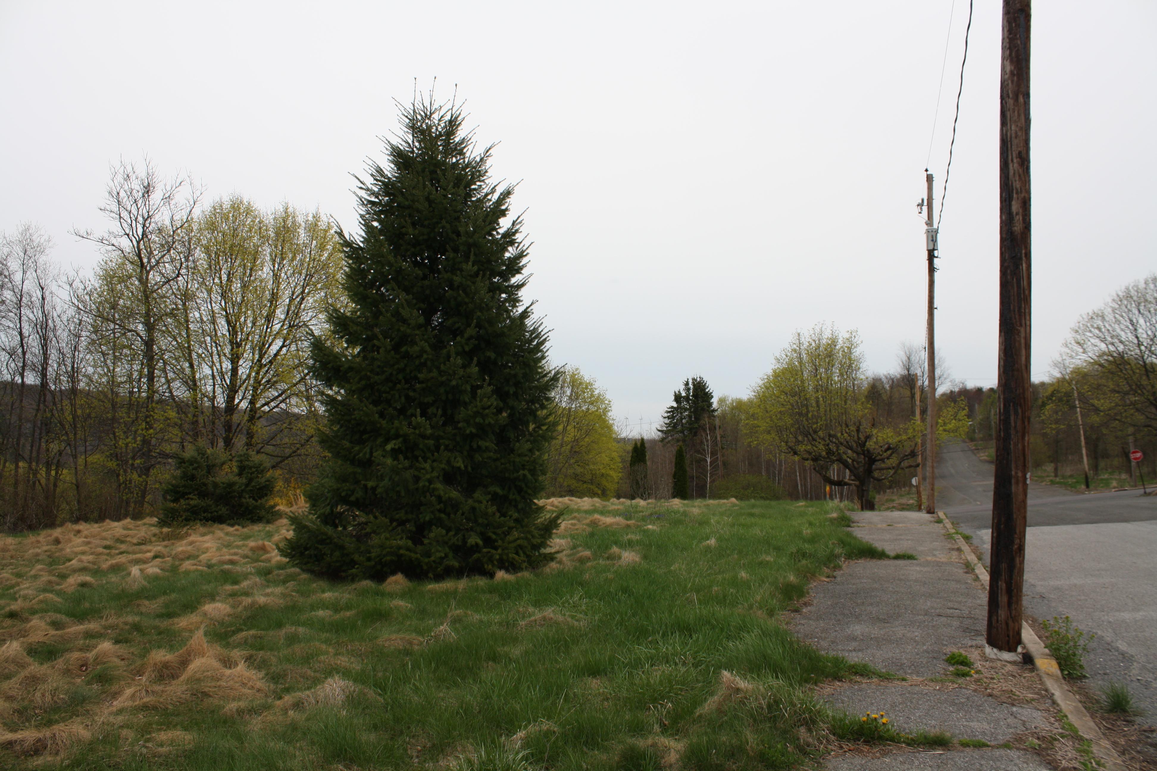Dieser Baum stand einmal in einem Vorgarten.