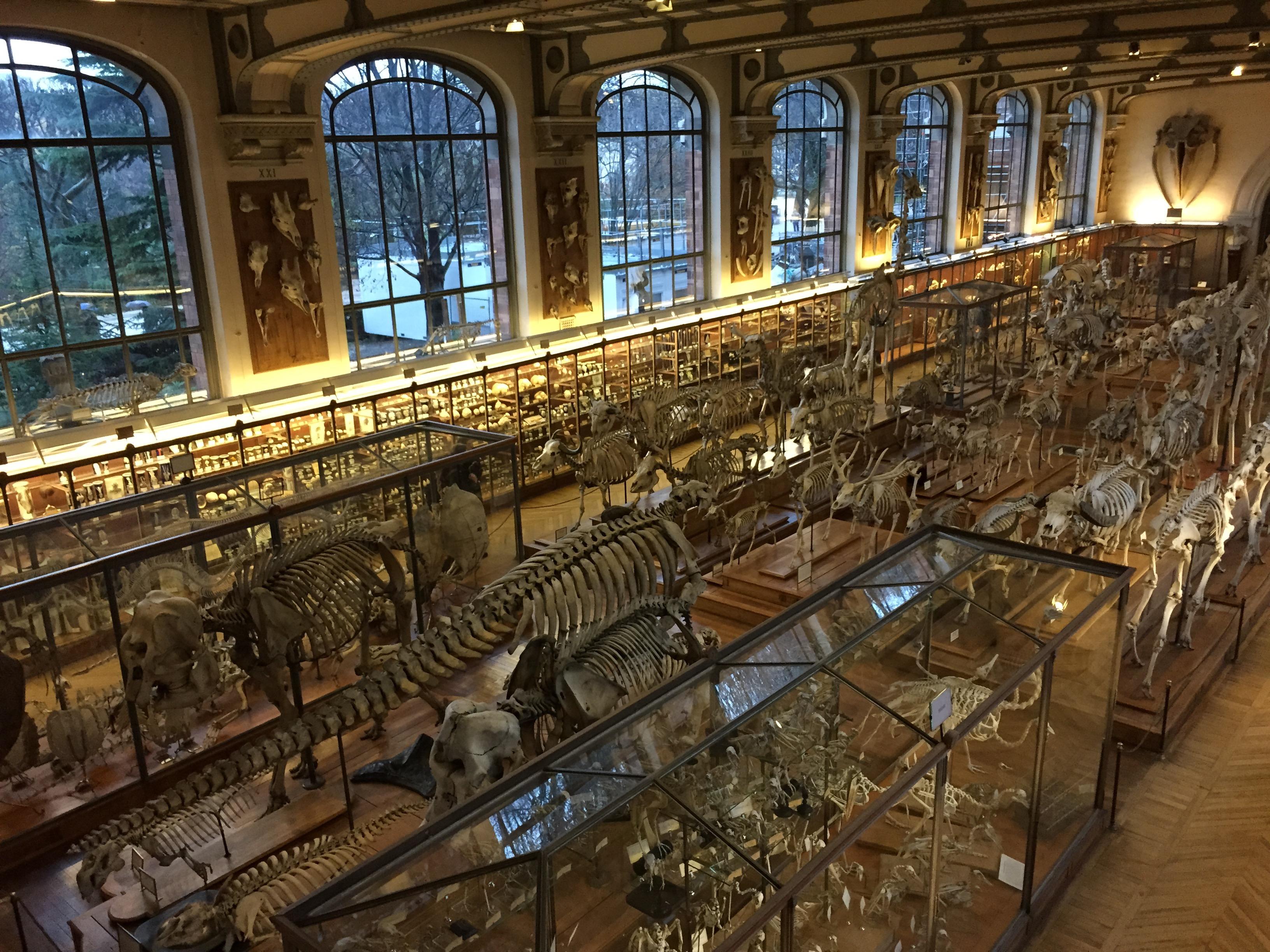 Die beeindruckende Skelettsammlung des Naturhistorischen Museums.