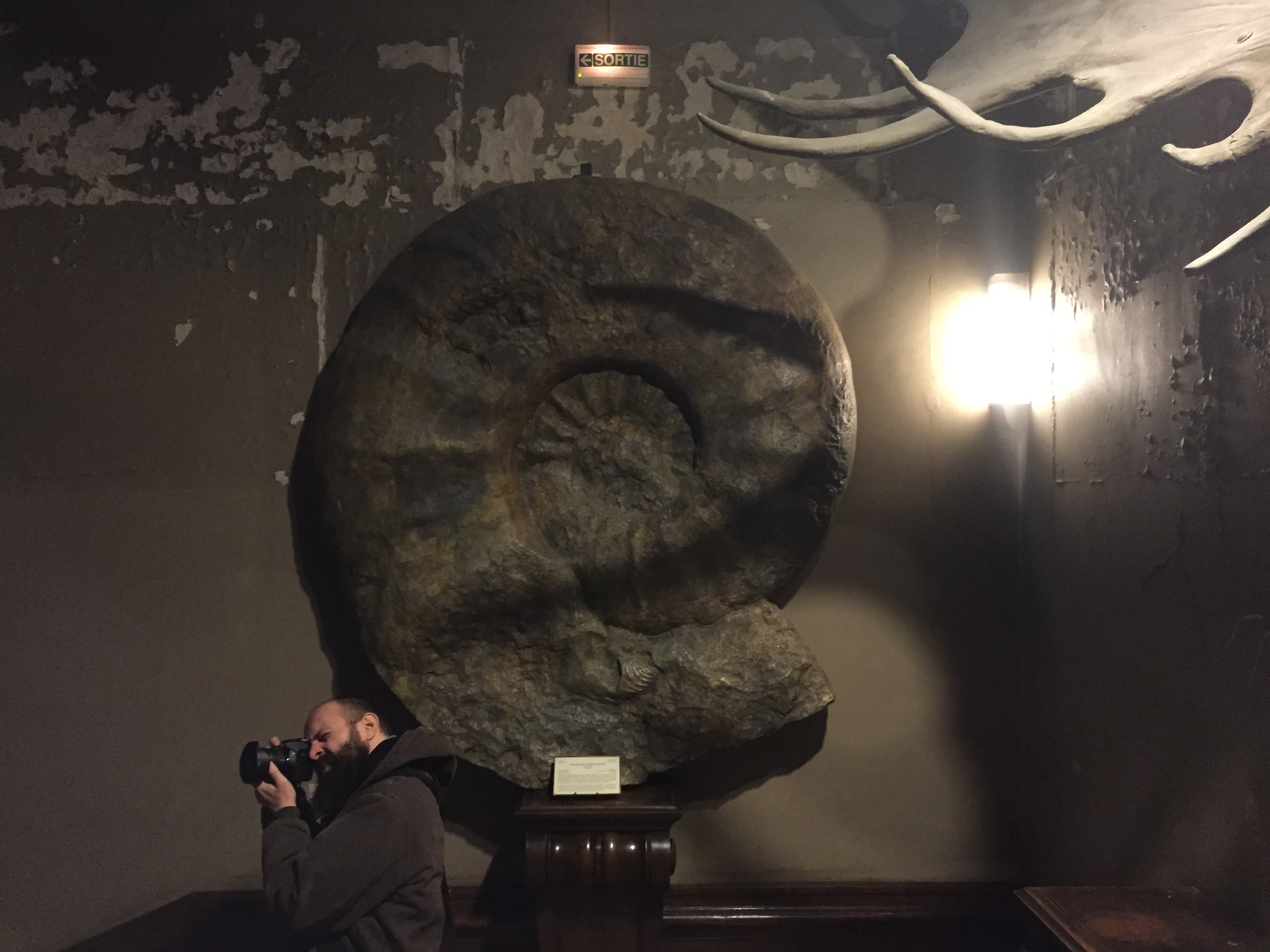 Gigantischer Ammonit in der Galerie de Paléontologie et d'Anatomie Comparée.