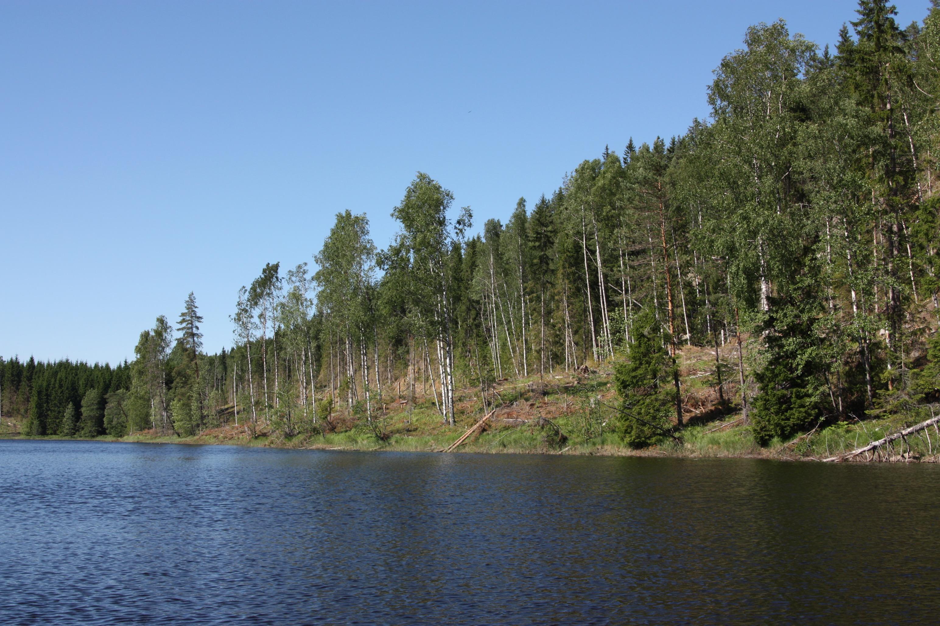 Die Uferlinie mit Sekundärwald.