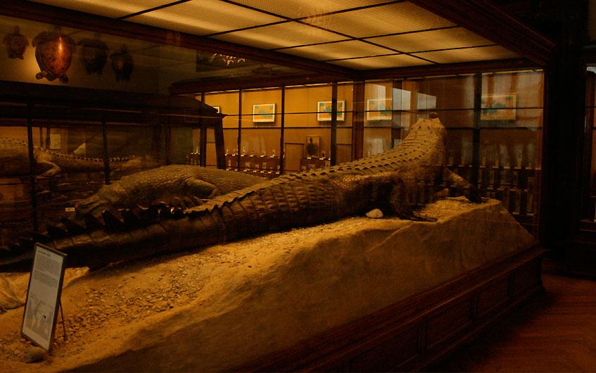 Tote Krokodile