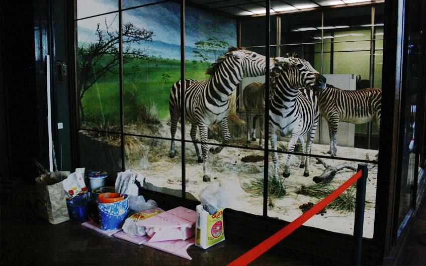 Tote Zebras kurz vor ihrer Renovierung